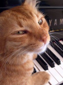 If a cat knows how to practice, it will be able to play piano by ear!